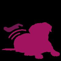 in-bewegung-hundephysiotherapie-ratingen-schmerz-behandeln